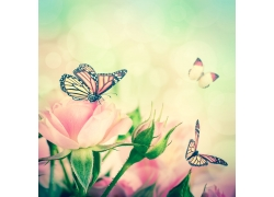 站在花朵上的蝴蝶