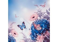 美丽的花朵与蝴蝶