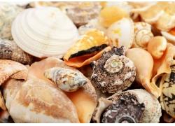 高清海螺贝壳摄影