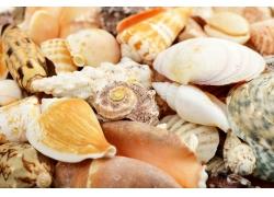海螺贝壳背景