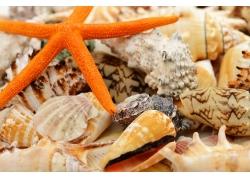 贝壳上的海星摄影