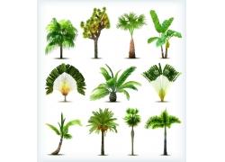 热带椰树素材