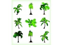 椰树树木素材