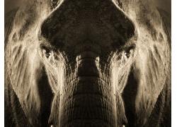 大象鼻子摄影