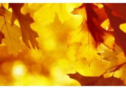 秋天树叶与梦幻光斑